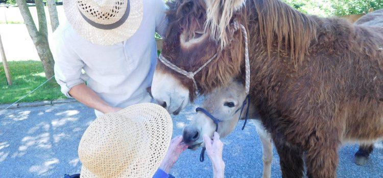 Tag des Tieres im Pflegeheim Fink - Esel